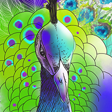 "T-shirts' print ""The Peafowl"" was created."